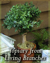 DIY living topiary project