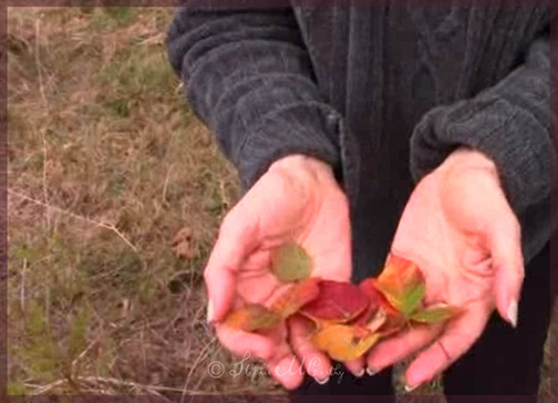 How to preserve Autumn Leaves in Liquid Wax