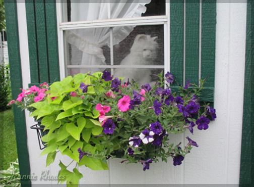 window box cottage decor