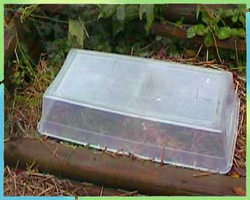 Mini greenhouse storage box